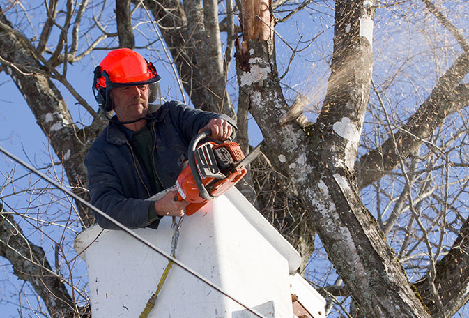 arborist with good SEO trims a tree with a chainsaw