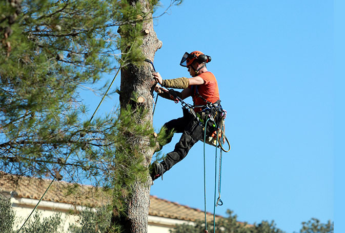 80 ideas for your tree care company's blog